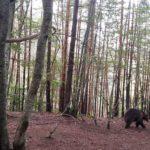 Отново до парка за танцуващи мечки край Белица