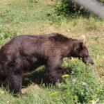 Парк за танцуващи мечки, с. Белица