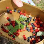 На лов за диви плодове в Рила: с. Добърско - х.Добърско