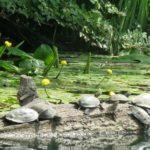 Разходка по река Велека - докосване до дивата природа на Странджа планина