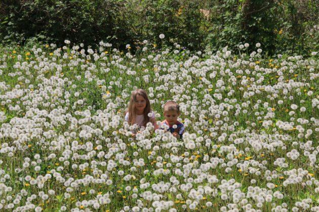 пролетни билки