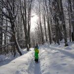 През зимата на Витоша с деца: Копитото-Боянски водопад-Бояна