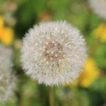 4 пролетни билки, които берем  по време на преходи